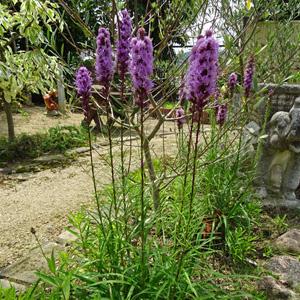 お庭の展示場 庭の植物 リアトリ...